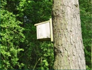 Bird box on tree