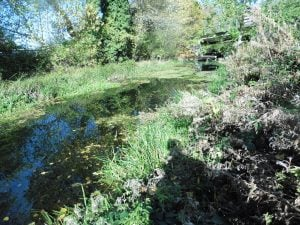 Watercourse in Warwickshire