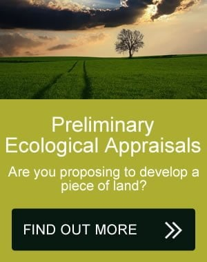 Preliminary Ecological Appraisal surveys