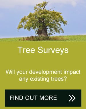 Tree Surveys Midlands
