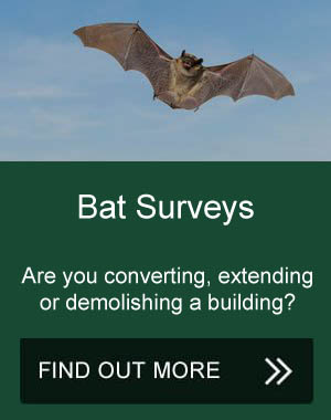 Bat Surveys