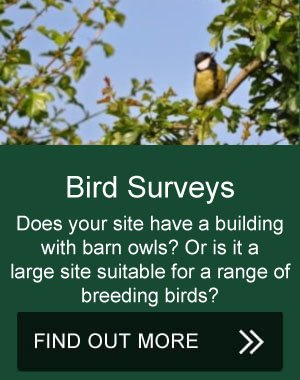 bird surveys