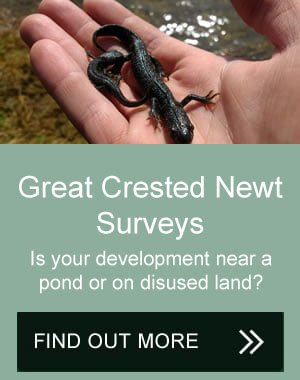 great crested newt surveys