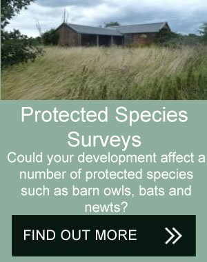 protected species survey